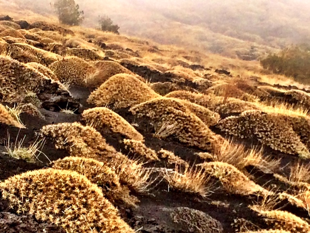 Amarillo & Gris Lava cubierta por pasto seco